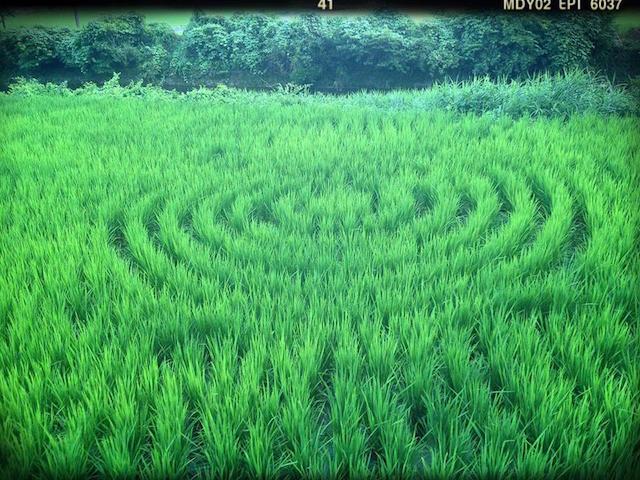 曼荼羅クリスタル農法